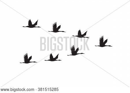 Vector Hand Drawn Flying Cranes Birds Flock Silhouette Isolated On White Background