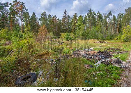 Garbage Dump In Forest