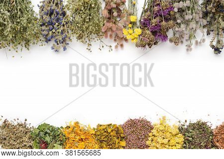 Medicinal Plants Bunches And Piles Of Medicinal Herbs On White Background. Top View, Flat Lay. Alter