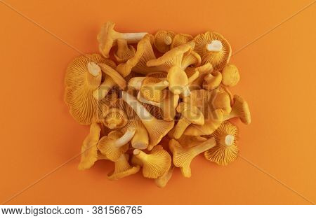 Heap Of Fresh Chanterelle Mushrooms On Orange Background, Top View