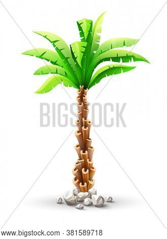 Tropical coconut palm tree plant with green leaves in stones. Nature detail. Coco palm-tree, isolated on white transparent background. 3D illustration.