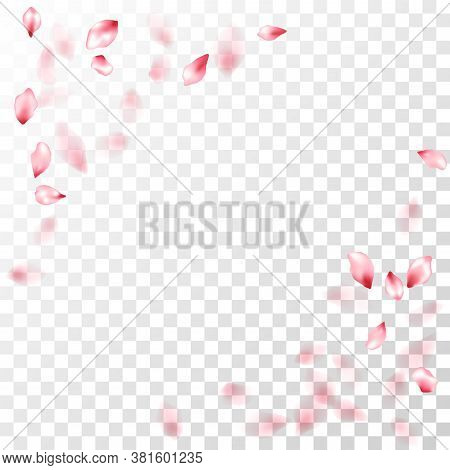 Pink Sakura Petals Falling Vector Graphics. Spring Tree Blossom Flower Parts. Sakura Flying Petals I