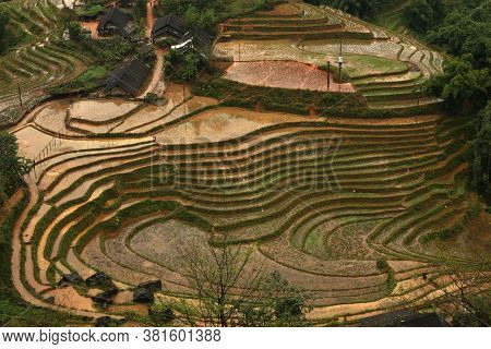 Aerial View Of The Rice Paddies Of Lao Chai, Sa Pa, Vietnam. Beautiful Oval Rings Of Layered Rice Pa