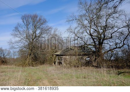 The Ruins Of An Old Abandoned Village House Among The Trees. Landscape. An Old Abandoned House In Th