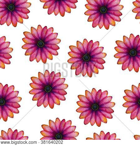 Seamless Floral Pattern With Vibrant Pink And Purple Daisy Flowers, Colorful Hand Drawn Floral Illus
