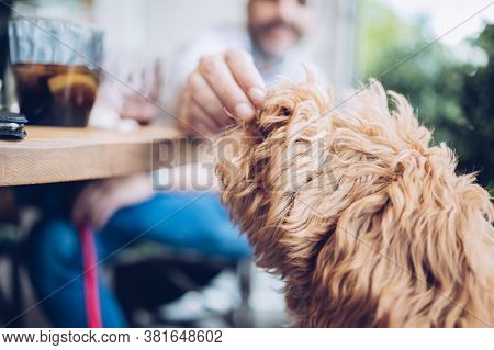 Giving A Potato To An Adorable Dog During A Meal At A Restaurant