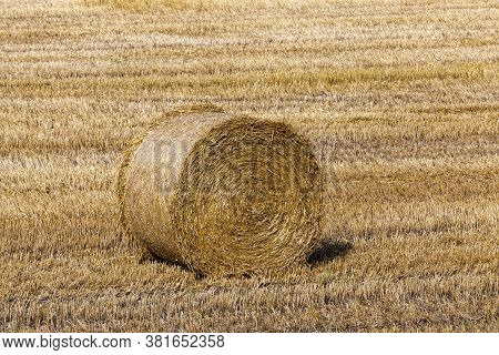 Mature Yellowed Cereals On Agricultural Land, Farming For Harvest And Profit, Money In Agriculture F