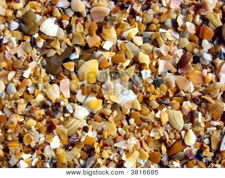 Broken Seashells.
