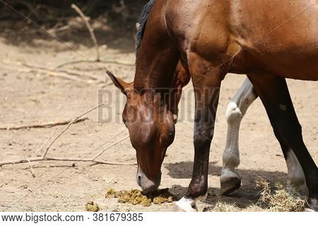 Horse\'s Feces On The Farm. Domestic Animal Feces On The Ground Outdoors. Saddle Horses In Paddock S