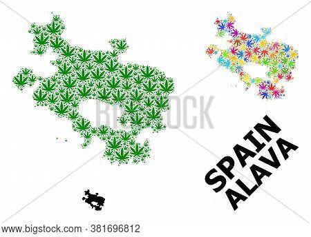 Vector Hemp Mosaic And Solid Map Of Alava Province. Map Of Alava Province Vector Mosaic For Hemp Leg