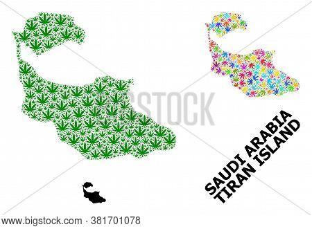 Vector Hemp Mosaic And Solid Map Of Tiran Island. Map Of Tiran Island Vector Mosaic For Hemp Legaliz