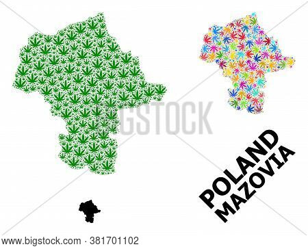Vector Weed Mosaic And Solid Map Of Mazovia Province. Map Of Mazovia Province Vector Mosaic For Weed
