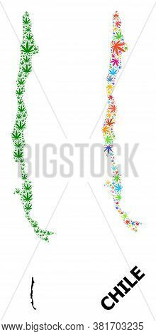 Vector Hemp Mosaic And Solid Map Of Chile. Map Of Chile Vector Mosaic For Hemp Legalize Campaign. Ma