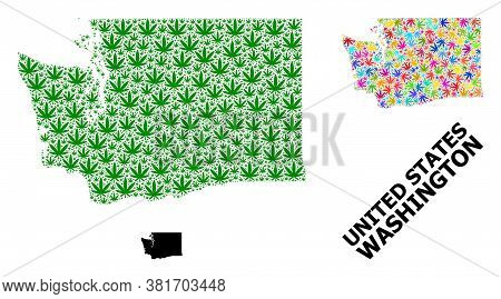 Vector Marijuana Mosaic And Solid Map Of Washington State. Map Of Washington State Vector Mosaic For