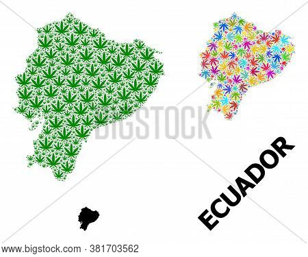 Vector Weed Mosaic And Solid Map Of Ecuador. Map Of Ecuador Vector Mosaic For Hemp Legalize Campaign