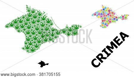 Vector Cannabis Mosaic And Solid Map Of Crimea. Map Of Crimea Vector Mosaic For Hemp Legalize Campai