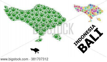 Vector Hemp Mosaic And Solid Map Of Bali Island. Map Of Bali Island Vector Mosaic For Hemp Legalize