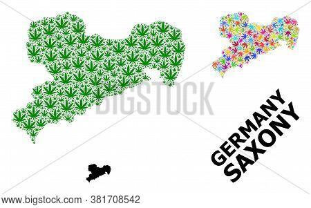 Vector Marijuana Mosaic And Solid Map Of Saxony State. Map Of Saxony State Vector Mosaic For Marijua