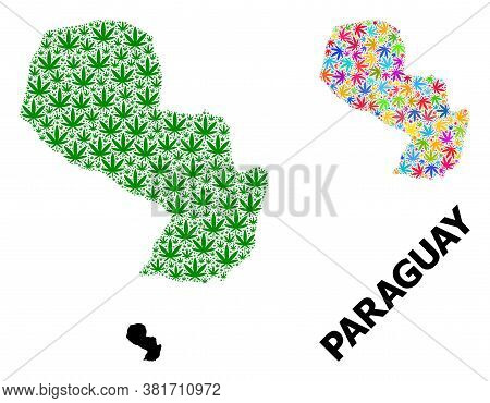 Vector Cannabis Mosaic And Solid Map Of Paraguay. Map Of Paraguay Vector Mosaic For Weed Legalize Ca
