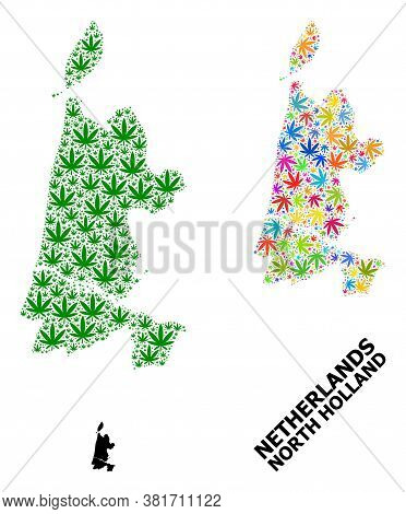 Vector Hemp Mosaic And Solid Map Of North Holland. Map Of North Holland Vector Mosaic For Weed Legal