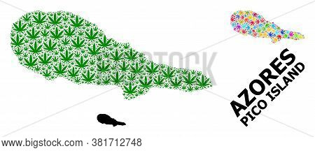 Vector Cannabis Mosaic And Solid Map Of Pico Island. Map Of Pico Island Vector Mosaic For Cannabis L