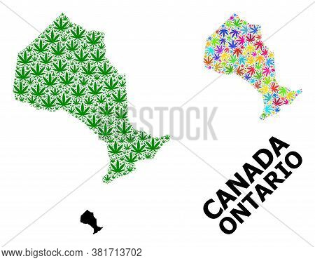 Vector Cannabis Mosaic And Solid Map Of Ontario Province. Map Of Ontario Province Vector Mosaic For