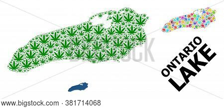 Vector Weed Mosaic And Solid Map Of Ontario Lake. Map Of Ontario Lake Vector Mosaic For Drug Legaliz