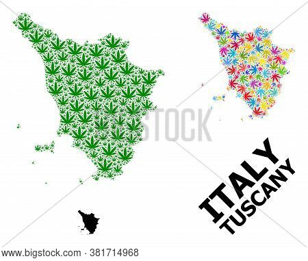 Vector Cannabis Mosaic And Solid Map Of Tuscany Region. Map Of Tuscany Region Vector Mosaic For Cann
