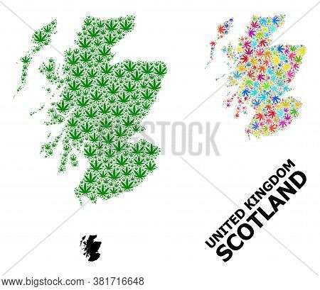 Vector Weed Mosaic And Solid Map Of Scotland. Map Of Scotland Vector Mosaic For Weed Legalize Campai