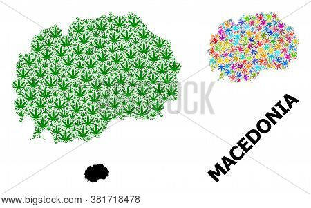 Vector Cannabis Mosaic And Solid Map Of Macedonia. Map Of Macedonia Vector Mosaic For Cannabis Legal