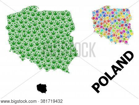 Vector Hemp Mosaic And Solid Map Of Poland. Map Of Poland Vector Mosaic For Hemp Legalize Campaign.
