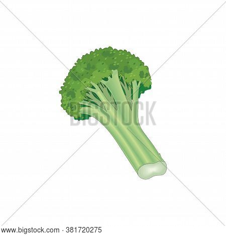 A Bunch Of Green, Leafy Brocolli On A White Background Isolated On A White In Eps10
