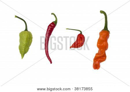 four species of peppers isolated on white