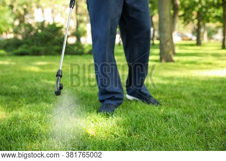 Worker Spraying Pesticide Onto Green Lawn Outdoors, Closeup. Pest Control