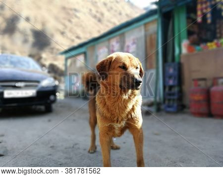A Companion Dog Is A Dog That Does Not Work, Providing Only Companionship As A Pet, Rather Than Usef