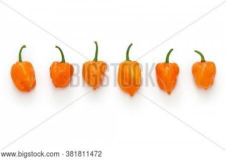 habanero hot chili pepper isolated on white background