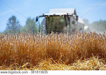 Combine Harvester Threshes Grain In A Field