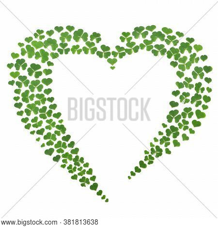 Green Clover Leaves Set Out In The Form Of Heart On White Background. St. Patrick's Day Vacation And
