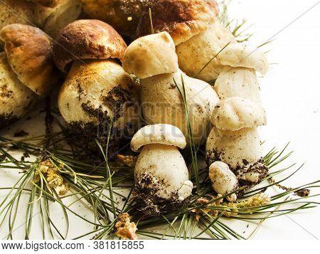 Fresh Boletus Edulis Or Cep, Porcini Mushrooms On The Wooden Background/ Shallow Dof.
