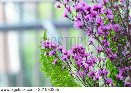 Spring Branch With Small Pink Flowers With Backlight And Copy Space