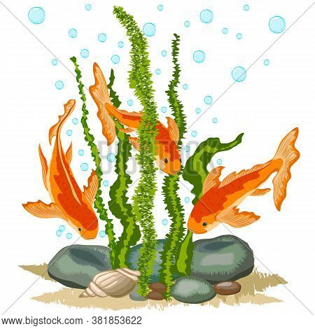 Illustration With Goldfish In A Pond.goldfish, Algae And Water Bubbles In Color Illustration.