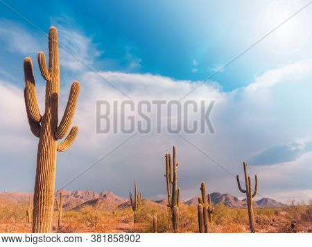 Desert landscape in Arizona,USA. Saguaro Cactus tree in Scottsdale.