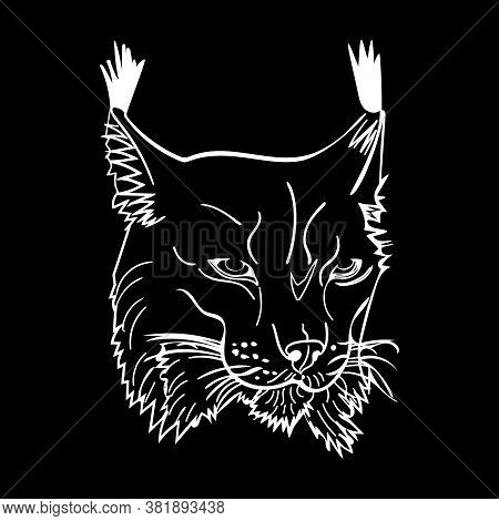 Sketch Style Portrait Of Lynx Isolated On Black Background. Wild Bobcat Black And White Sketch Icon.