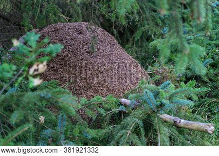 An Anthill In The Thicket Of A Summer Forest.