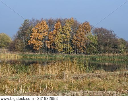 View Over Wetlands To Trees With Autumn Foliage At Staveley Nature Reserve, North Yorkshire, England