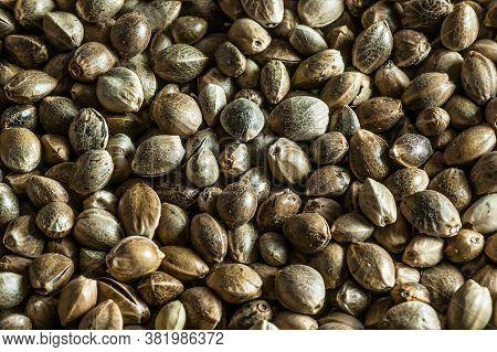 Heap Of Dried Organic Hemp Seeds Or Cannabis Plant Seeds Background. Cannabis Herb Concept. Hemp See