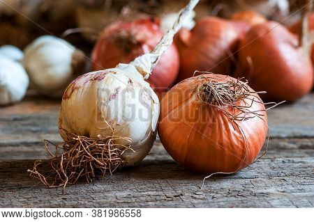 Ripe And Raw Onion And Garlic On Wooden Background, Alternative Medicine, Organic Cleaner. Onions An