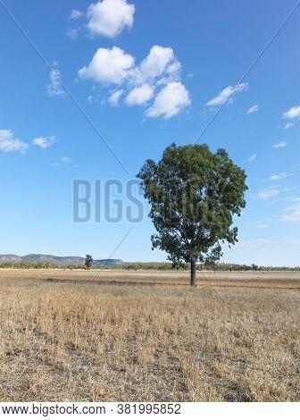 Rural Landscape Along The Carnarvon Highway In Central Queensland Australia