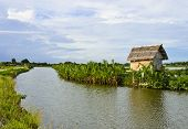 Little Nupa Palm Leaves Hut In  Aquaculture, Thailand poster