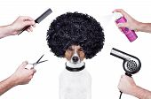 hairdresser scissors comb dog dryer hair and spray poster